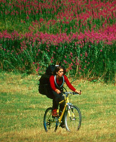 Violett rosa rot blühende blumen